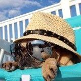 Vous partez en vacances avec votre chien ? Rendez-vous à l'office du toutourisme !