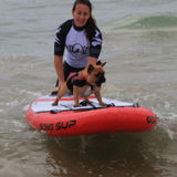 Les Toutous surfeurs de retour ! La compétition de surf canin européenne en images