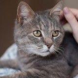 D'après la science, les chats peuvent transmettre la maladie d'Alzheimer !