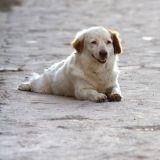 Trafic de chien : la campagne choc