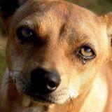 Mayenne : un trafic de chien démantelé et condamné