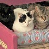 Pour réchauffer les cœurs des chats de la SPA, elle tricote des couvertures en laine