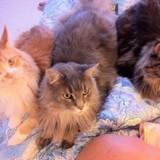 Cyril Hanouna et ses chroniqueurs se moquent du deuil de Laurence Boccolini suite à la mort de son chat