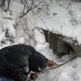 Ils cherchent des chiots dans la neige, soudain ce que fait la maman chien les émeut jusqu'aux larmes (vidéo)