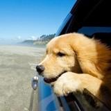 Vacances d'été : que faut-il avoir dans la trousse à pharmacie de son chien ?