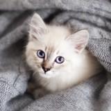 6 réflexes à avoir absolument lorsque vous sauvez un chaton de la rue