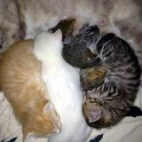 2 écureuils orphelins adoptés par une maman chat