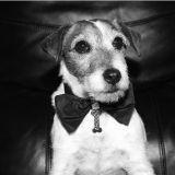 Uggie : le chien star de The Artist publie ses mémoires !
