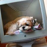 Assurez le suivi santé de votre animal grâce à un site web !