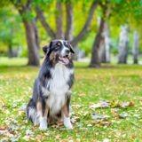 Top 20 des races de chiens préférées des Français en 2019