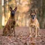 Un maître-chien laisse ses deux chiens à son épouse pendant ses vacances et elle refuse de s'en occuper
