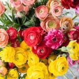 Quels sont les bouquets de fleurs sans danger pour mon chien ?