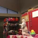 Au Japon, un chat a appris à imiter le comportement d'un humain à la perfection ! (Vidéo)