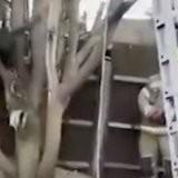 Coincé dans un arbre, ce chat fait quelque chose qu'un pompier n'avait jamais vu en 25 ans de carrière (vidéo)