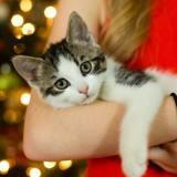 10 choses qui prouvent que les chats se comportent comme des bébés !