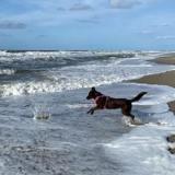 5 choses à savoir absolument avant d'emmener votre chien nager !