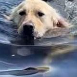 Le toutou nage dans l'eau quand une forme s'approche et lui saute dessus, ses maîtres retiennent un cri d'effroi