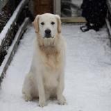 Elle promène son chien dans la neige : quand elle soulève sa patte, elle a une vision d'horreur