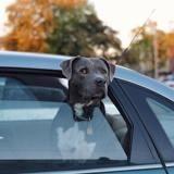 12 chiens se trouvent dans un van, un homme s'approche et ce qu'il fait choque tout le monde