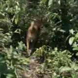 Perdus dans la jungle, leurs vacances tournent à l'horreur quand soudain les buissons remuent...