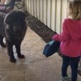 Elle demande à sa fille de dire au revoir à son chien avant l'école : ce qu'elle fait l'émeut aux larmes (vidéo)