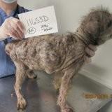 La SPA reçoit un appel des forces de l'ordre pour sauver des animaux, quand ils arrivent ils frémissent d'horreur