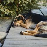 Il n'hésite pas à mentir à la police pour se « débarrasser » de son chien : rien ne se passe comme il l'avait prévu