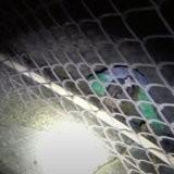 Sauvetage en pleine nuit : ils sont appelés en renfort dans un cimetière pour éloigner le danger qui rôde (vidéo)