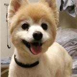 10 chiens méconnaissables après leur passage chez le toiletteur