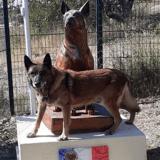 Inauguration d'une maison de retraite pour les chiens réformés de la police, une première en France