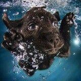 Des chiots sous l'eau, de magnifiques photos !