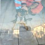Egaré sur la voie ferrée, ce chien a été secouru par des agents de la SNCF