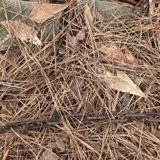 En promenade avec son chien dans les bois, il gratte le sol et fait une découverte bouleversante