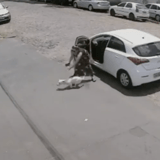 Elle fait sortir ses 2 chiens de sa voiture, mais n'en laisse qu'un remonter : la vidéo glace le sang du monde entier