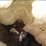 Ils explorent une grotte quand une forme se met à bouger dans le noir : ce qu'ils aperçoivent les choque (vidéo)