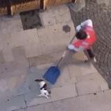Deux ados filment un chat en train de se faire maltraiter et ne font rien : la raison est très choquante