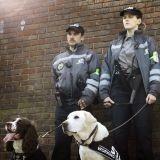 La mission de ces chiens ? Détecter des MST dans les rues et clubs britanniques !