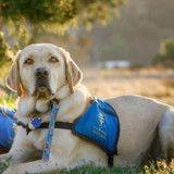 Les chiens, une aide précieuse pour les personnes diabétiques ?