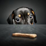 7 conseils essentiels pour veiller au bien-être de son chien
