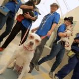 Quand des chiens de refuge font leur parodie d'Uptown Funk ! (Vidéo du jour)