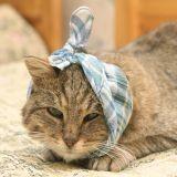 Urgences : les bons gestes à connaître pour sauver votre chat