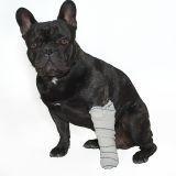 Urgences : les bons gestes à connaître pour sauver votre chien