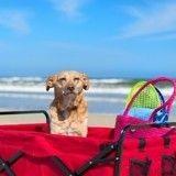 Top 5 des meilleures destinations pour partir en vacances avec son chien