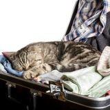 En retard, il court à l'aéroport mais quand on lui demande d'ouvrir sa valise, il n'en revient pas