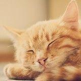 Vacciner son chat : pourquoi, quand et contre quoi le protéger ?
