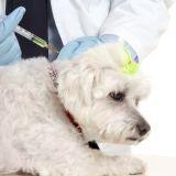 La vaccination du chien en 9 questions