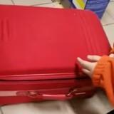 Les bénévoles de la SPA trouvent une valise abandonnée : ce qui est dedans leur donne des frissons de colère