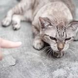 Punir votre chat avec un vaporisateur d'eau : bonne ou mauvaise idée ?