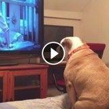 Ce chien qui regarde des films d'horreur a des réactions incroyables (Vidéo du jour)
