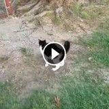 Ce petit chat défie un lion, et vous n'allez pas en croire vos yeux